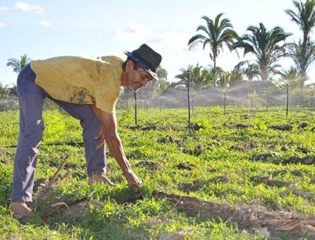 Programa Compra Direta da Agricultura Familiar será reativado