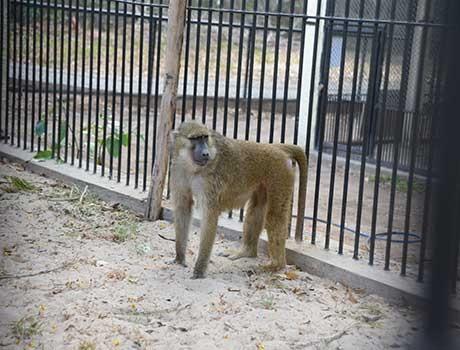 Parque Zoobotânico de Teresina ganha uma nova espécie de macaco